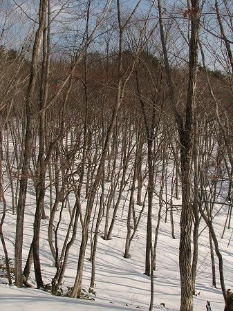 落葉樹の森へ