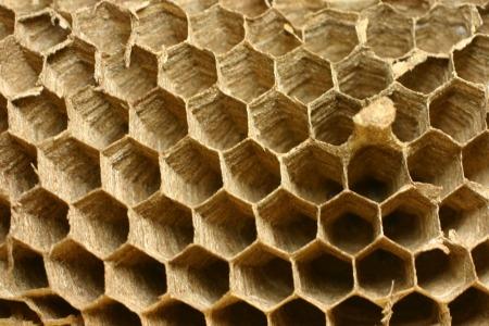 ハチの巣.jpg