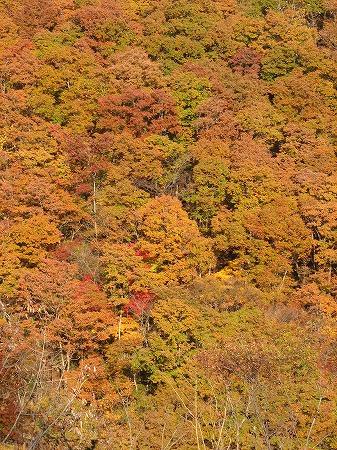 色づく雑木林